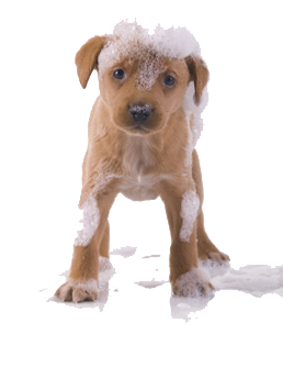 wet puppy PNG